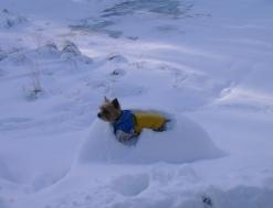 Sněhová nadílka leden 07 004