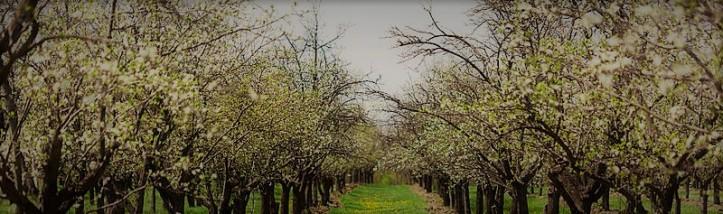 sadu-liwki-drzewa-19458408